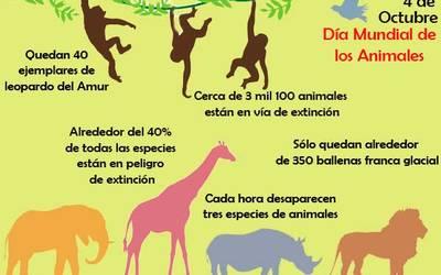 4 De Octubre Dia Mundial De Los Animales El Sol De Puebla