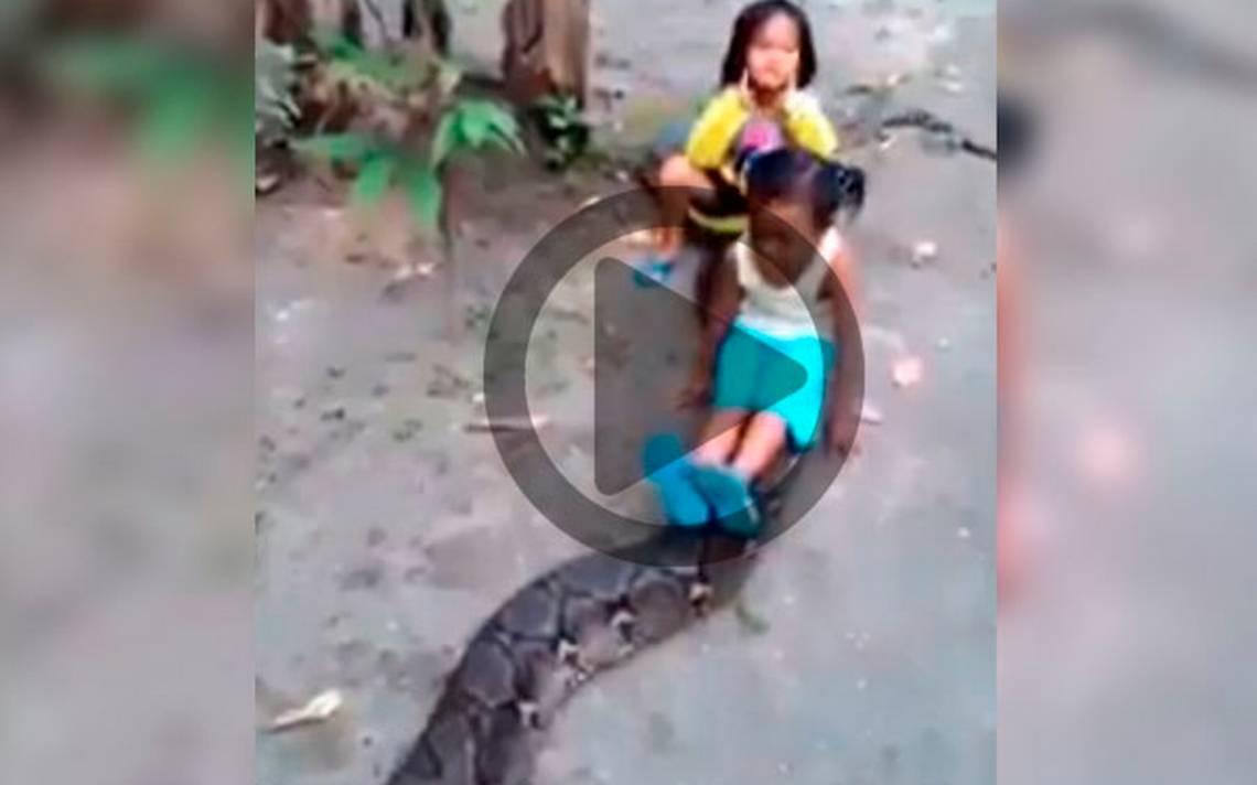 Revelan video de niñas jugando con una enorme serpiente - El Sol ...
