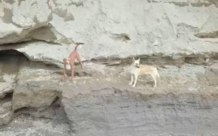 Video] ¡Se logró! Rescatan a perritos que cayeron en socavón de Puebla - El  Sol de México   Noticias, Deportes, Gossip, Columnas