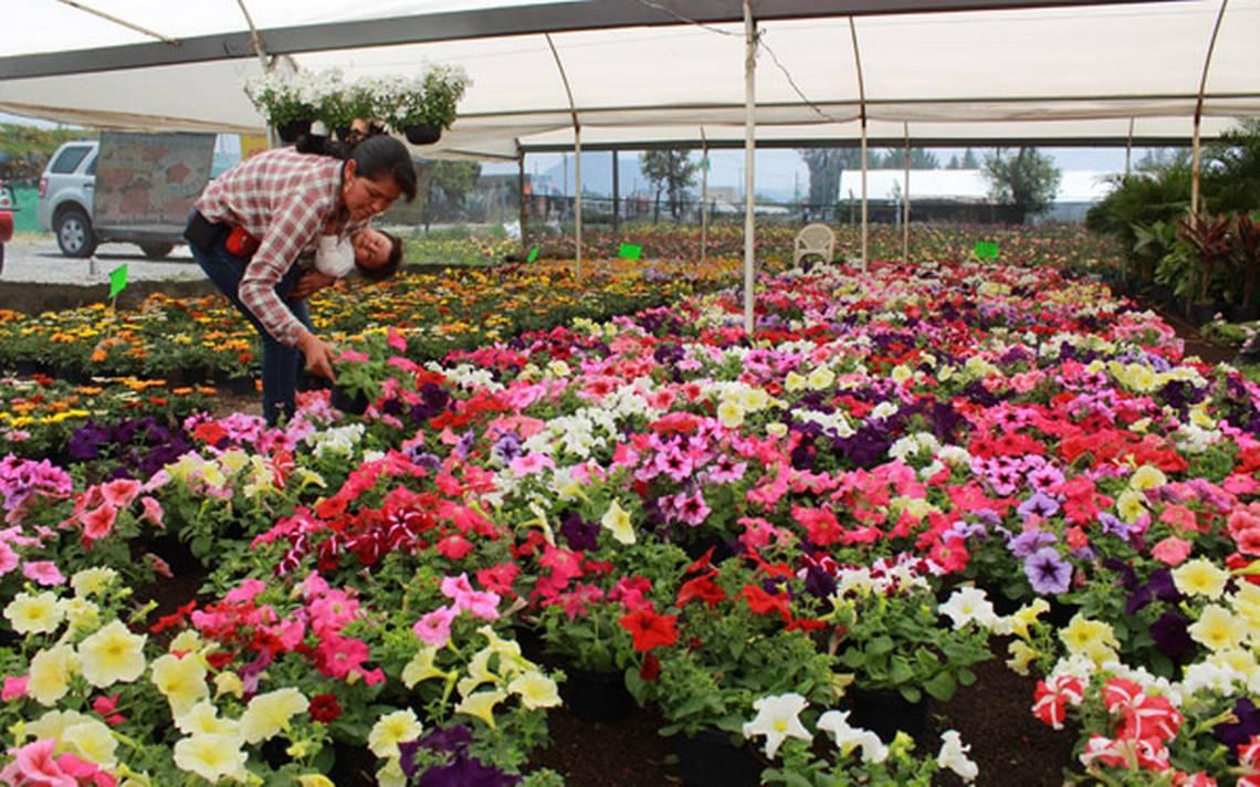 Avent rate en los viveros de atlixco de las flores el for Viveros de plantas en atlixco