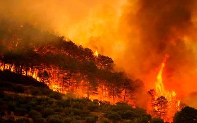 Resultado de imagen para mexico incendios forestales