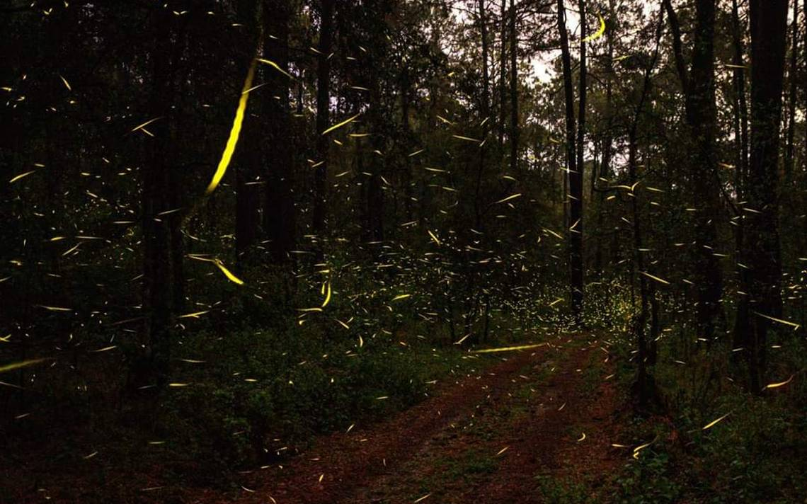 vista del santuario de las luciernagas