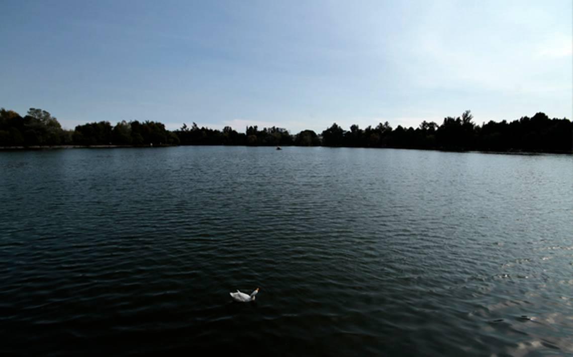 patos nadando sobre la laguna de San Baltazar